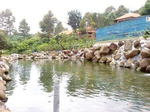 Kolam Ikan Koi lengkap dengan suasana sejuk Pasuruan