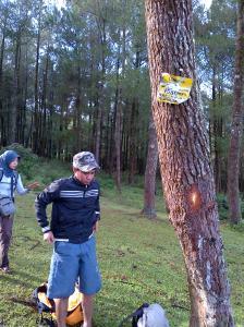 Hutan Pinus di Lembana (Kaki Gunung Bawakaraeng)