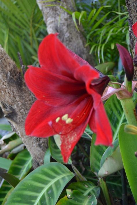 Flora di Kawasan Kebun Teh Malino
