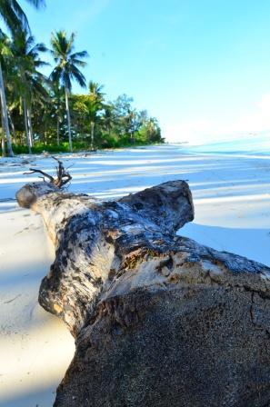 Tampak teduhan pepohonan kelapa ditepi pantai